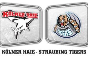Kölner Haie - Straubing Tigers; Ehre, wem Ehre gebührt